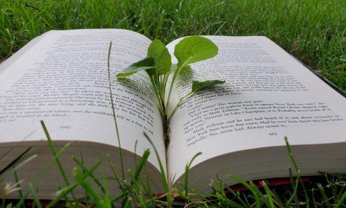 Book seedling rll